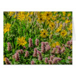 Sunflowers and Horsemint - Wildflowers - Summer Large Greeting Card