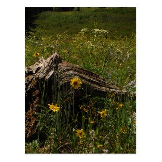 Sunflowers and log postcard
