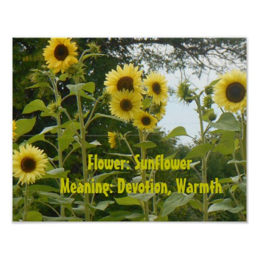 sunflowers and meaning poster zazzle. Black Bedroom Furniture Sets. Home Design Ideas