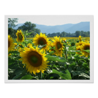 Sunflowers and Mountains Poster