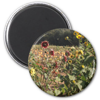 Sunflowers and Pumpkins 2 Inch Round Magnet