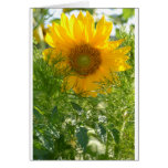 Sunflowers and Summer Cards
