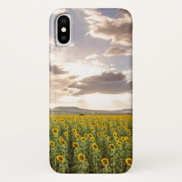 Sunflowers at Sunset iPhone X Case