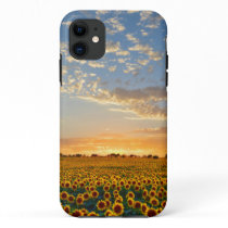 Sunflowers at Sunset iPhone 11 Case