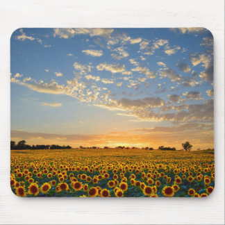 Sunflowers at Sunset Mouse Pad