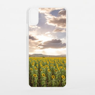 Sunflowers at Sunset iPhone XS Case