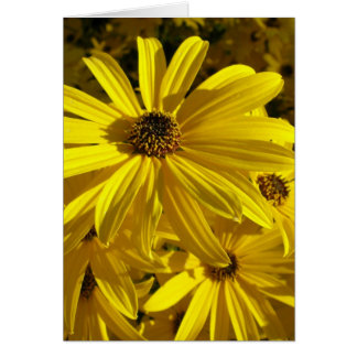 Sunflowers at the Zoo Greeting Cards