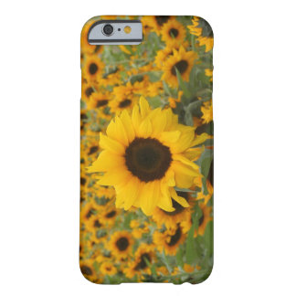 Sunflowers Barely There iPhone 6 Case