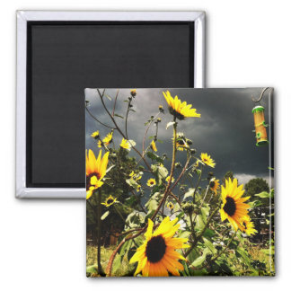 Sunflowers Before The Storm Clouds Photograph Magnet
