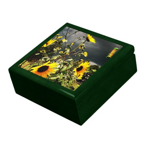 Sunflowers Before The Storm Photograph Gift Boxes