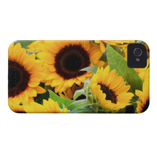 Sunflowers Blackberry Bold Barely There Case