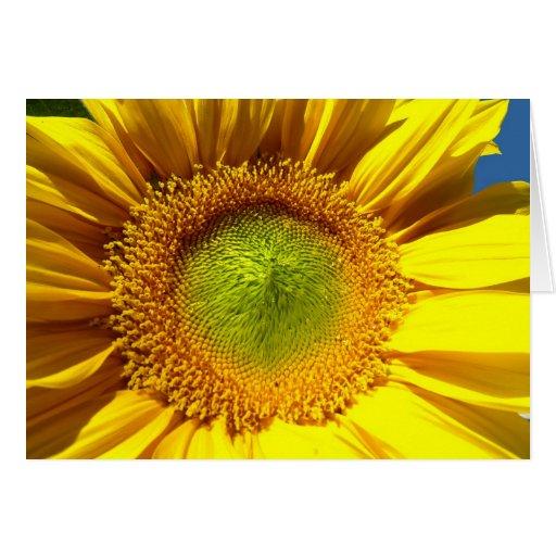 sunflowers blossom greeting card