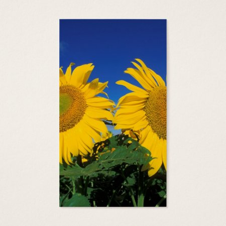 Sunflower Farming Business Cards