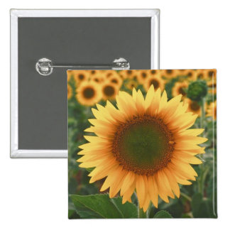Sunflowers Pinback Button