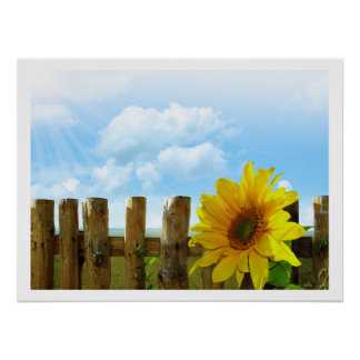 Sunflowers by a Fence under Blue Sky Poster
