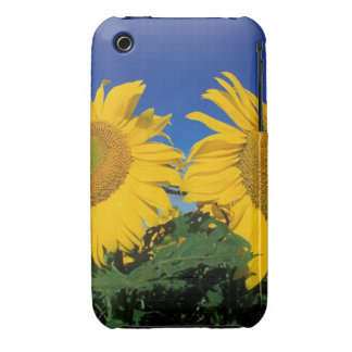 Sunflowers iPhone 3 Case