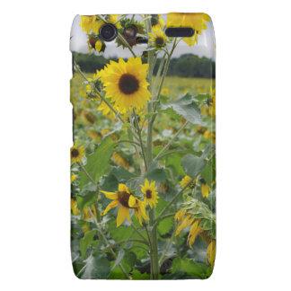 Sunflowers Motorola Droid RAZR Case