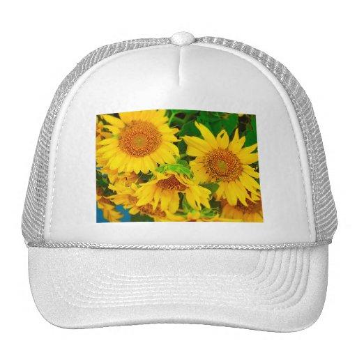 Sunflowers City Market KC Farmer's Market Mesh Hats