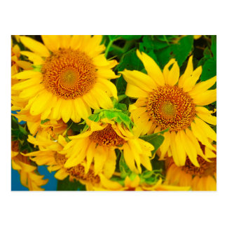Sunflowers City Market KC Farmer's Market Postcard