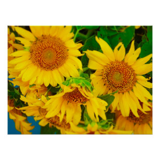 Sunflowers City Market KC Farmer's Market Poster