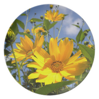 Sunflowers Collector plate