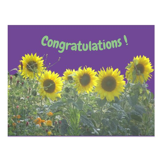 Sunflowers Congratulations Postcard