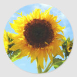 Sunflowers Envelope Seals or Stickers