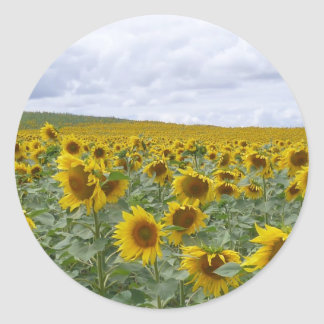 Sunflowers field - champ de tournesols - girasol classic round sticker