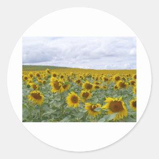 Sunflowers field - champ de tournesols - girasol classic round sticker
