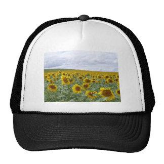 Sunflowers field - champ de tournesols - girasol mesh hats