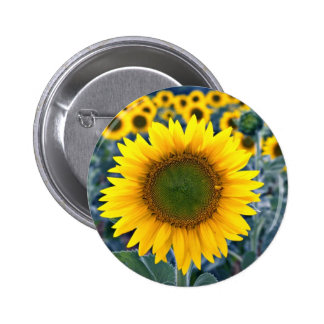 Sunflowers  flowers pinback button