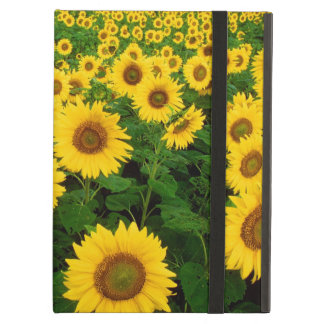 Sunflowers Forever iPad Cases