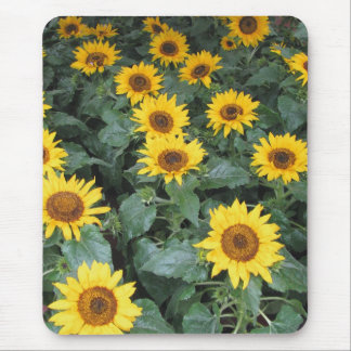 Sunflowers Forever Mouse Pad