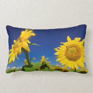 Sunflowers (Helianthus Annuus), Near Senekal Lumbar Pillow