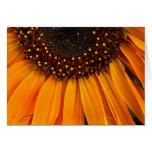 Sunflowers II Card