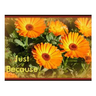 Sunflowers in a Mist Postcard