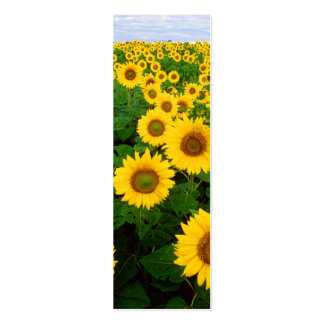 Sunflowers in Fargo, North Dakota Double-Sided Mini Business Cards (Pack Of 20)
