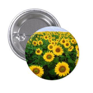 Sunflowers in Fargo, North Dakota Pinback Buttons