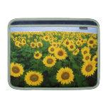 Sunflowers in Fargo, north Dakota MacBook Air Sleeve