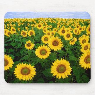 Sunflowers in Fargo, north Dakota Mouse Pad