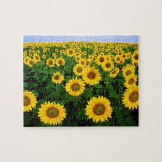 Sunflowers in Fargo north Dakota Puzzles