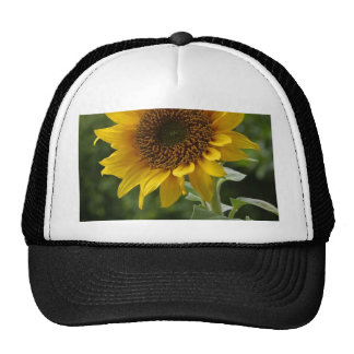 Sunflowers In Field Mesh Hats