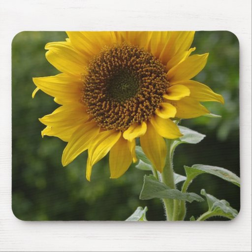 Sunflowers In Field Mouse Pads