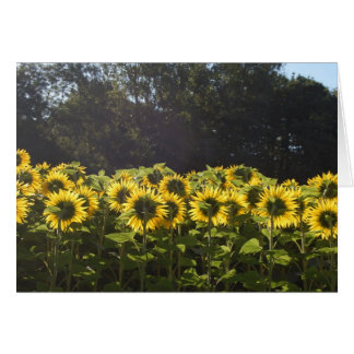 Sunflowers In France Card