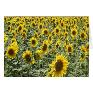 Sunflowers in Late Afternoon Greeting Card