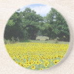 Sunflowers in Limousin Beverage Coasters