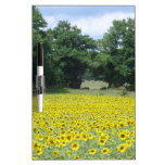 Sunflowers in Limousin Dry Erase Whiteboards