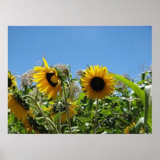 Sunflowers in Sonoma Print