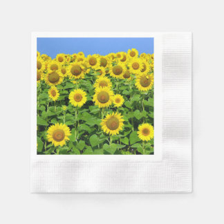 Sunflowers In The Field Coined Cocktail Napkin