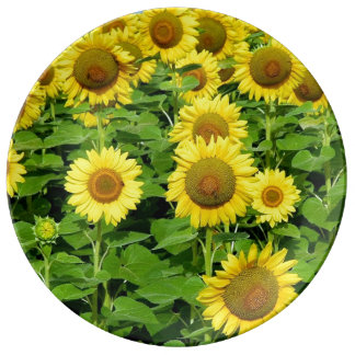 Sunflowers In The Field Porcelain Plate